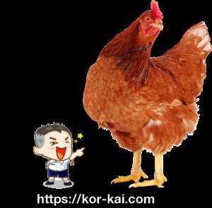 kor-kai.com